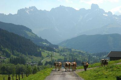 Rakouskými Alpami v běžeckých botách aneb s úsměvem mezi vrcholy