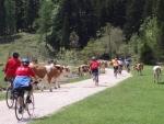 Zájezdy CK Trip do Rakouska